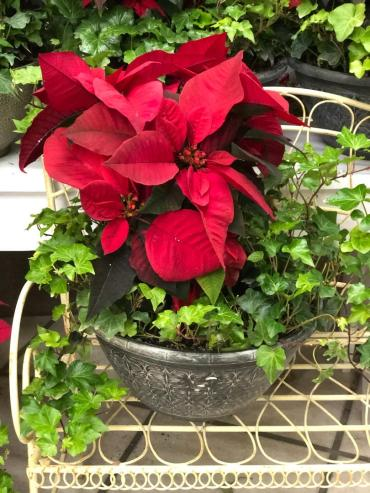 Poinsettia & Ivy Bowl (PRE-ORDER)